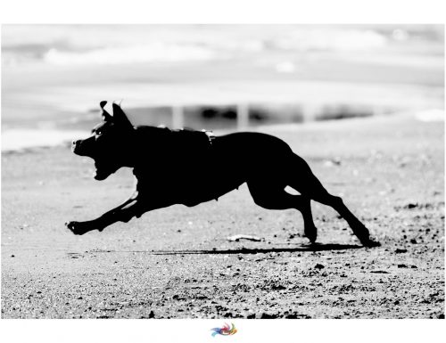 The Dogs of War #dogs